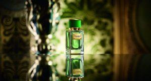 Velvet Cypress de la Dolce & Gabbana